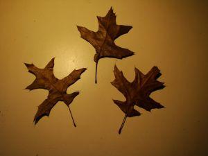 oak leaves north tree