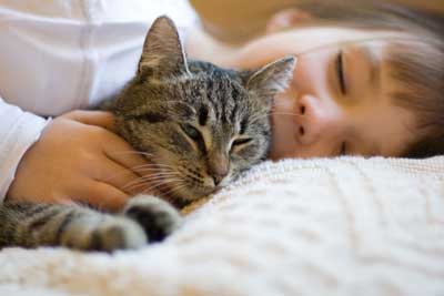 Your Cat's UTI and Diet