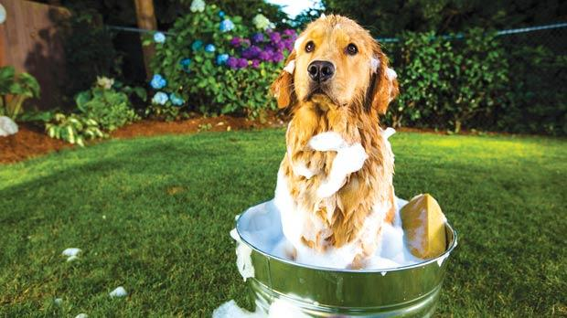 natural dog shampoo
