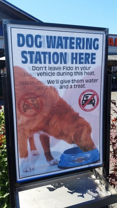 Dog water Station
