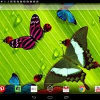 Friendly Bugs Live Wallpaper