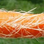 Karotte bei Durchfall