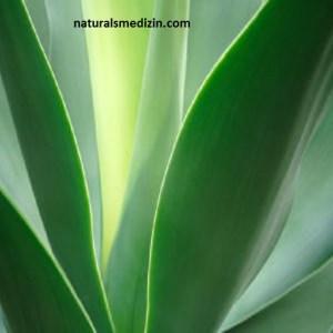 naturalsmedizin.com