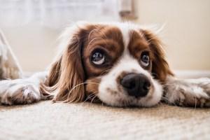 Teppichböden sind Gift für Allergiker