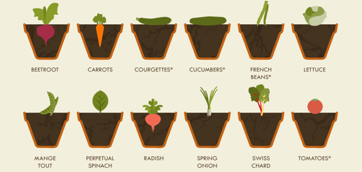 Vegetable-growing-cheat-sheet_720_crop_2