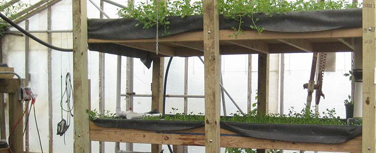 aquaponics-farming