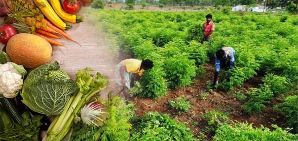 campo-orgánica-india comida-735-350-