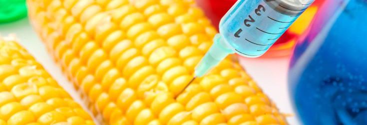 gmo_corn_syringe_735_250