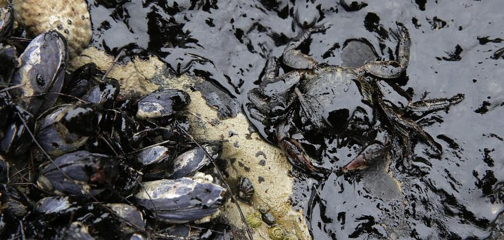 Shocking Photos: California's 105,000 Gallon Oil Spill Hits Pacific Ocean Oil_spill_2_735_350