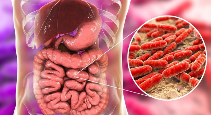 What are the healthy bacteria in our gut?