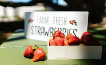 What is your favorite food to buy at a farmers market?
