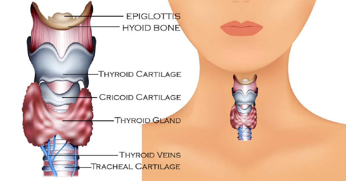 What you NEED to know about your thyroid health | Natural ...