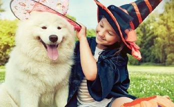a pet friendly Halloween