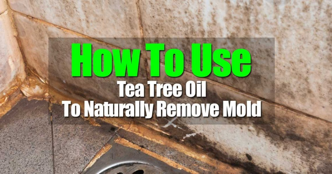 Image Result For Tea Tree Oil Where Can You Buy It
