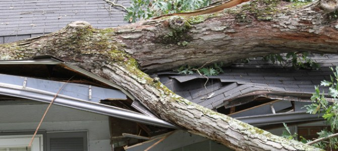 Weathering the storm: 10 safety tips for using a chainsaw to clear debris