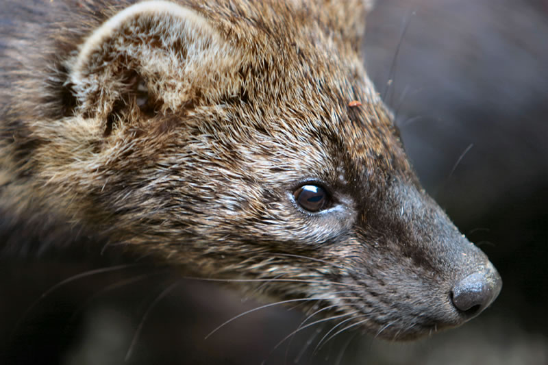 RHODE ISLAND WOMAN bitten by FISHER  Other RABIES reports