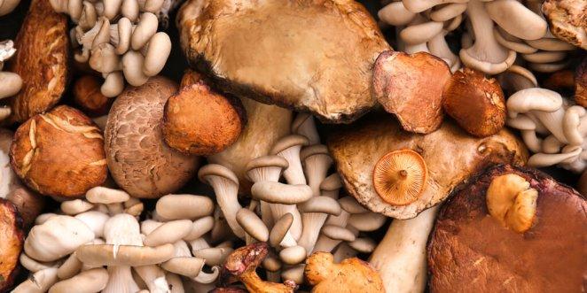Where to buy Medicinal Mushrooms