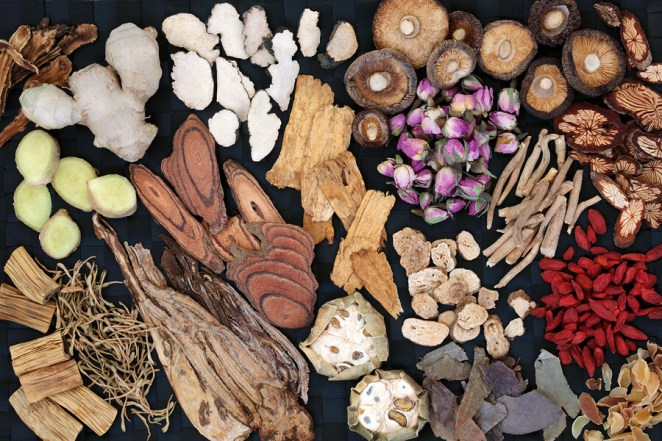 Which mushrooms are best for the immune system