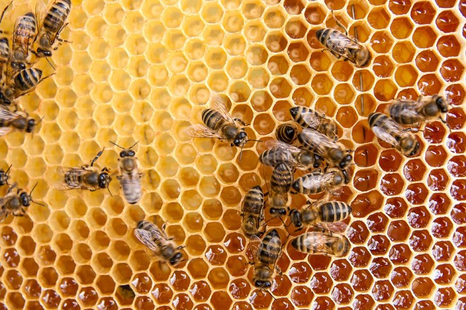 IS manuka honey good for weight loss