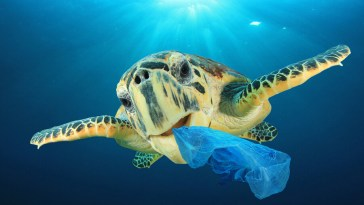 How Does Plastic Affect Animals