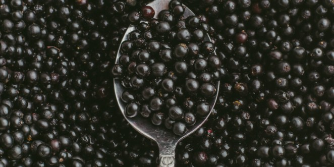 Is it Safe to Eat Elderberries Straight