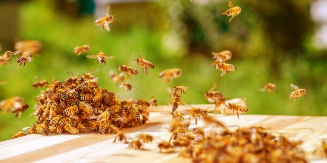 Natural Bee Sting Remedies for Quick Relief_Avoid Being Stung