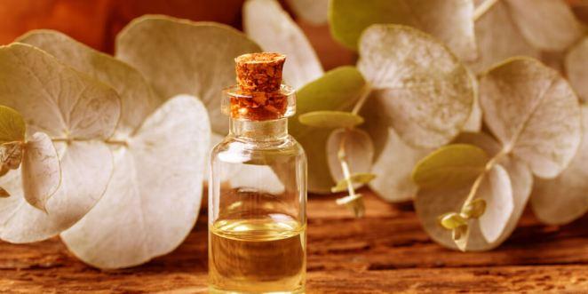 Top 7 Eucalyptus Oil Benefits and Uses_Kill Bacteria