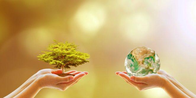 7 Instant Ways to Naturally Be More Environmentally Friendly_Shop Environmentally