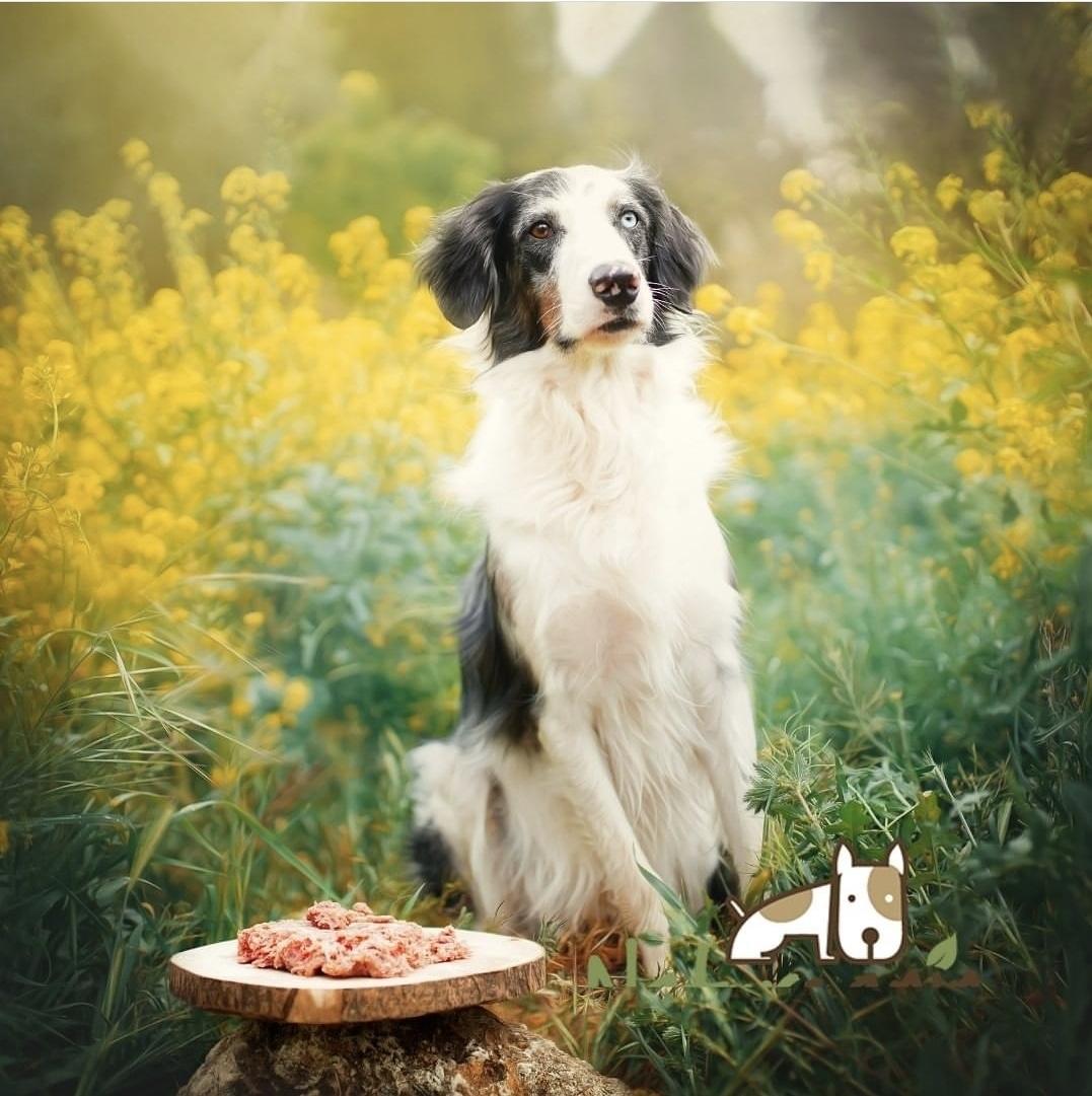 Quali verdure non possono mancare nella dieta del tuo animale domestico?  🐾