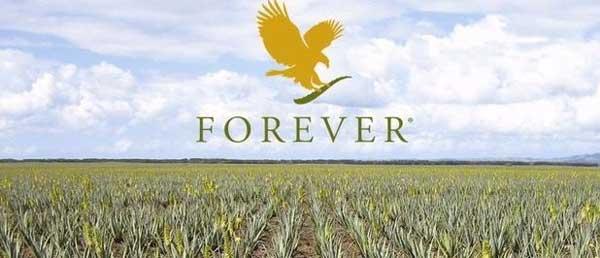 champs d'aloe vera avec le logo forever living en jaune dans le ciel
