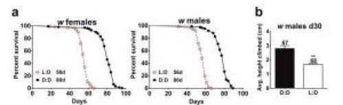 esposizione luce blu causa disturbi del normale ciclo del sonno accelerando l'invecchiamento e la neurodegenerazione cellulare. Neuroscienze
