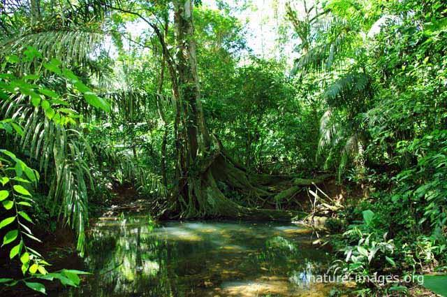 Image result for jungle scene