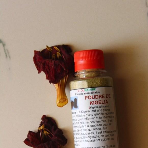 Kigelia-poudre-kigelia-fleurs