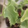 5 plantes aromatiques ventre plat à avoir à la maison