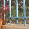 Quelques plantes de la beauté de l'île de Gorée