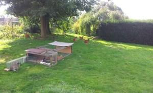 Notre petit jardin / pelouse