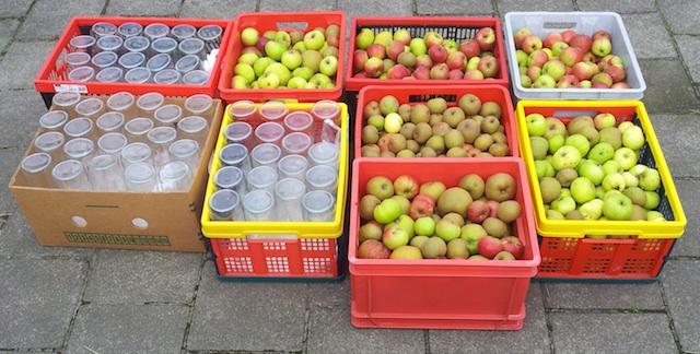 Le résultat de la cueillette de pommes