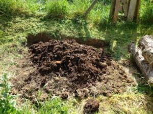 Ajout de compost maison