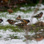 Groupe oiseaux