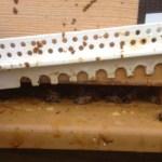 Ouverture de la porte de la ruche