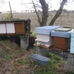 Stress pour la survie des abeilles après l'hiver...