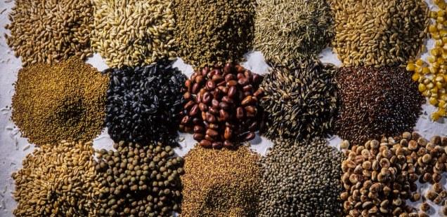 Une façon de gérer ses semences