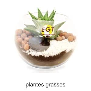 plante grasse terrarium