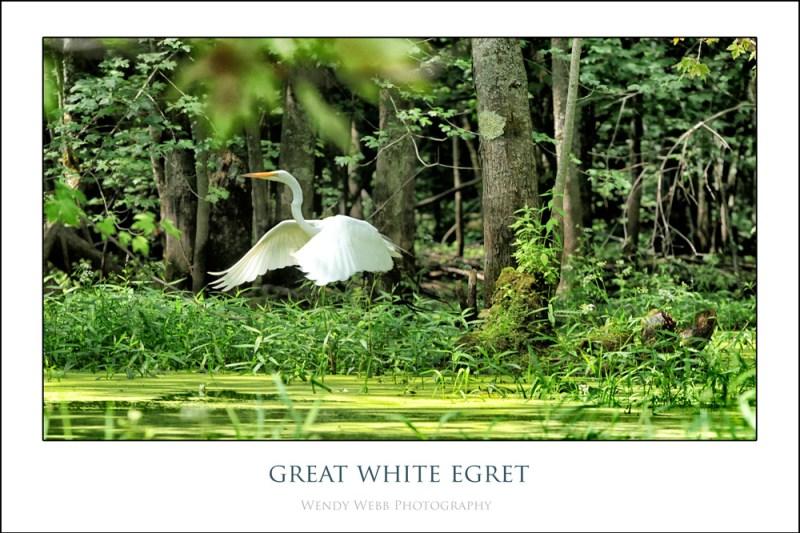 egret 2013