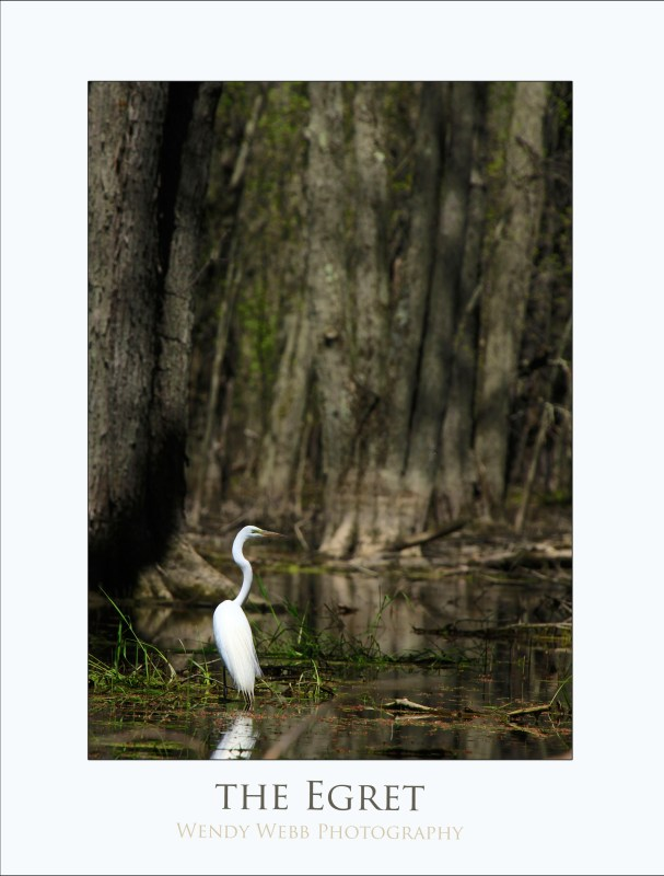 egret a lone