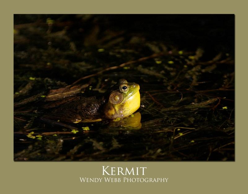 frog-kermit