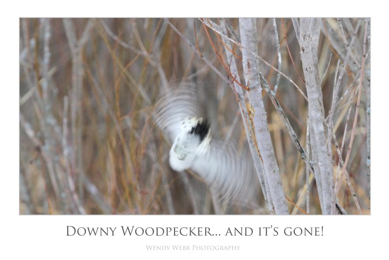 woodpecker gone