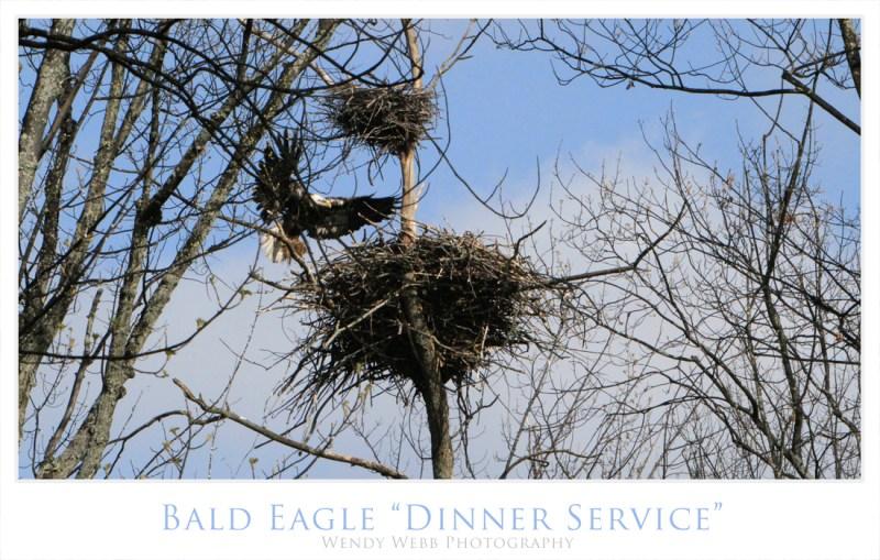 eagle dinner service