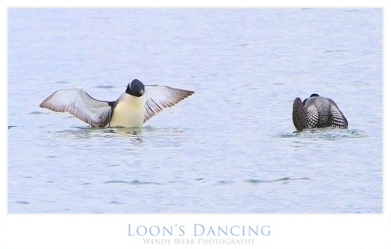 loons dancing 2
