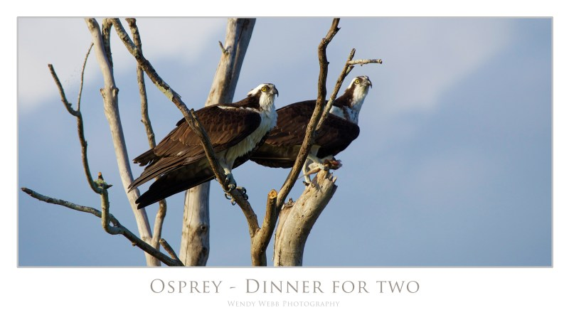 osprey dinner for two